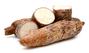 Century Farms' Yucca Root